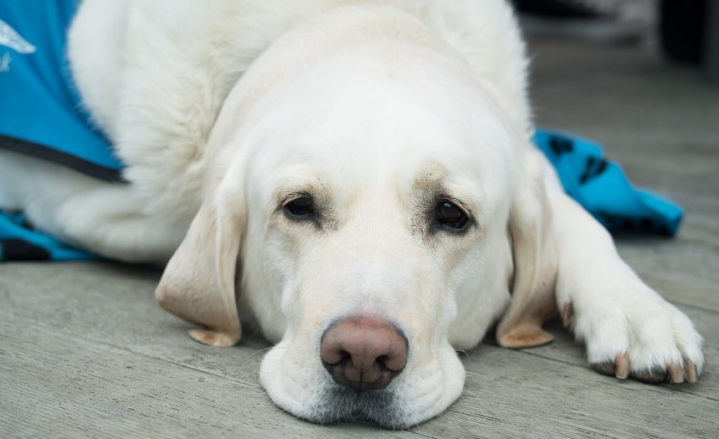 International Guide Dog Day - 24 April 2019